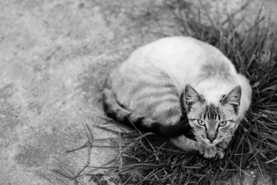 todo amor que houver nesta vida, gustavo dragunskis fotografo